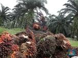 Tarif Pungutan Ekspor CPO Direvisi, Subsidi Biodiesel Aman?
