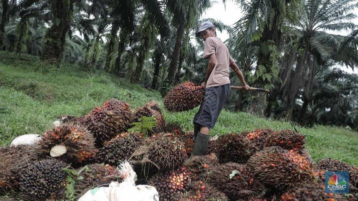 Ilustrasi kelapa sawit. (CNBC Indonesia/Muhammad Sabki)