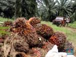 Sri Lanka Blokir Sawit, Tapi Harga CPO Melesat, Kok Bisa?