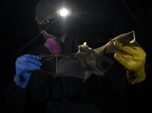 Virus Nipah Disebut Calon Pandemi Asia, Ini Gejalanya!