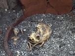 Kerangka Eks Budak Pompeii Ditemukan, Fakta Baru Terungkap