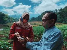 Canggih! Ujicoba Smartfarming BNI Ditebar di 5 Provinsi