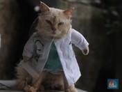 Lucu Banget! Intip Kucing Jadi Dokter sampai Superhero