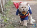 Gokil! Kucing & Anjing Tes Covid Juga di Negara Ini
