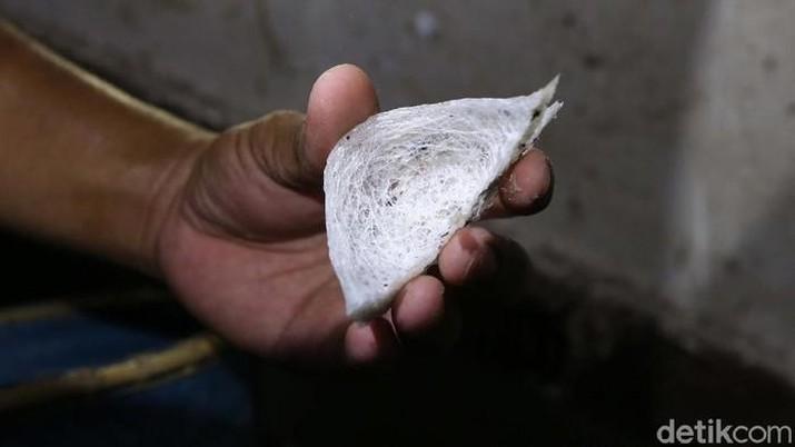 Ilustrasi Sarang Burung Walet (detikFoto/Rachman Haryanto)