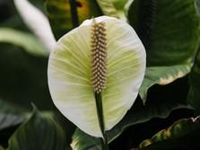 Bunga Marigold & Tanaman Hias yang Cocok Diberikan saat Imlek
