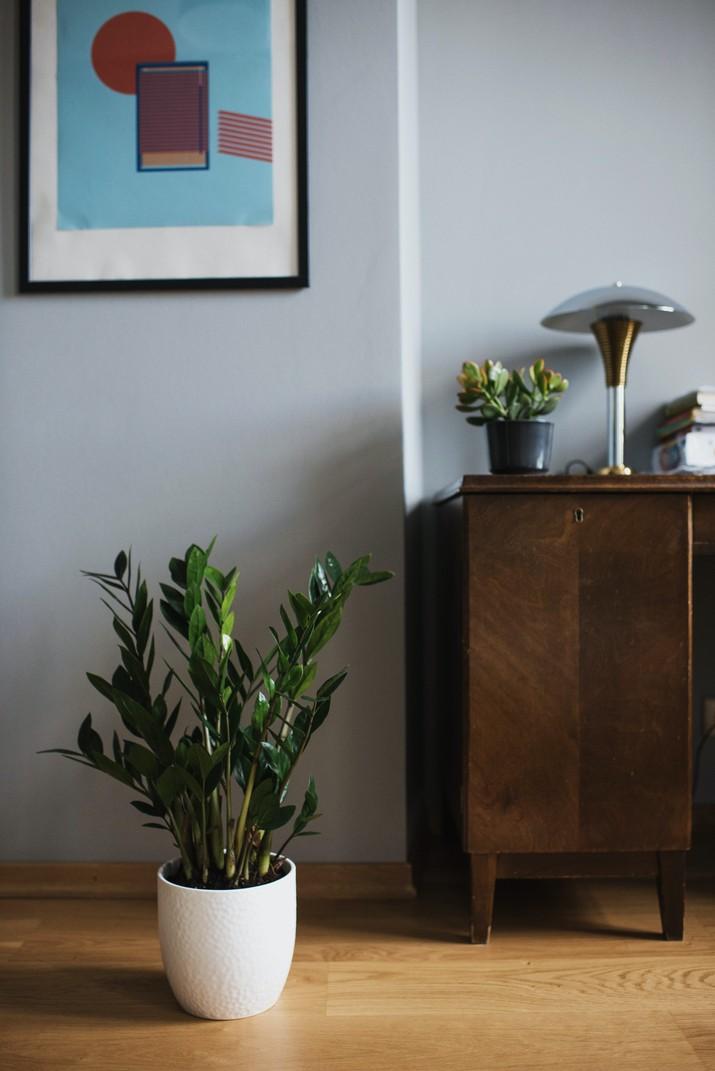 Tanaman zz plant (Photo by Ksenia Chernaya from Pexels)