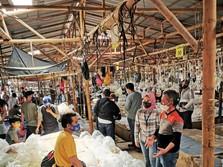 Kisah Pedagang Ikan Hias di Bogor, Meraih Cuan & Go Digital