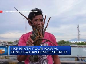Menteri KKP Larang Ekspor Benur