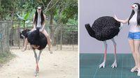 Seniman Ini Bikin Patung dari Foto Hewan yang Viral, Gemas!