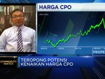 Ekonom Proyeksi Harga CPO 2021 Bisa di Kisaran USD 730/ton