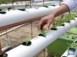 Milenial Ini Bikin Bangga RI, Bantu Petani Bisa Jadi Tajir