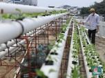 Yuk Intip Urban Farming Hidroponik di atas Masjid