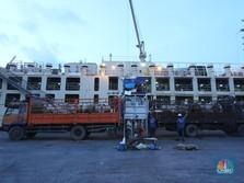 Intip Ribuan Sapi Impor Australia Tiba di Jakarta