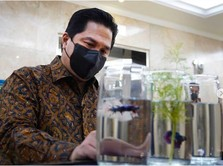 Cerita Erick Thohir yang Turut Terjangkit 'Demam' Ikan Cupang