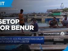 Terima Saran Ombudsman RI, KKP Setop Ekspor Benih Lobster