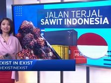 Jalan Terjal Sawit Indonesia