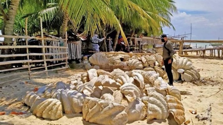 Penemuan Kerang Raksasa di Filipina (Tangkapan Layar Video via AP)