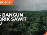 Genjot Produksi, Triputra Agro Bangun 2 Pabrik Sawit Baru