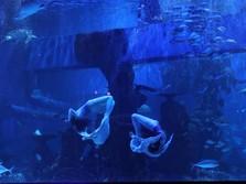 Intip Geliat 'Kartini' di Bidang Konservasi Satwa Laut