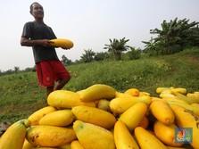 Potensi Cuan di Pertanian Rp1.000 T, Tapi ada Banyak Masalah