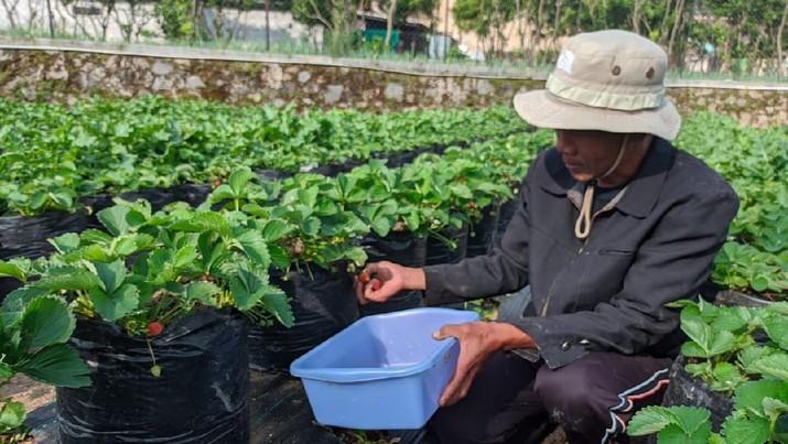 Perkuat Komitmen SDGs dan ESG, Pertamina Dorong Perekonomian di Sektor Kelembagaan Islami. Salah satunya dengan  Pesantren Agribisnis Al Ittifaq di Jawa Barat untuk pembiayaan petani binaannya