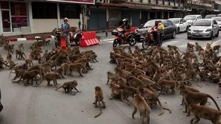 Ilustrasi Monyet. Ist