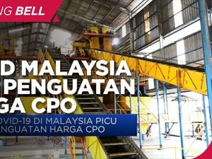 Covid-19 di Malaysia Picu Penguatan Harga CPO