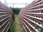 Intip Bisnis Urban Farming yang Cuan Saat Pandemi Masih Ganas