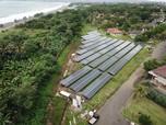 Pertamina Targetkan 17% Bisnis dari Energi Hijau di 2030