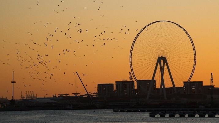 Birds circle a passing boat near the under-construction Ain Dubai, or Dubai Eye, Ferris wheel, in Dubai, United Arab Emirates, Saturday, Dec. 21, 2019. (AP Photo/Jon Gambrell)