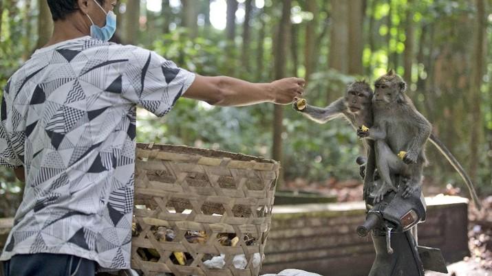 Monyet-monyet kelaparan di Bali. (AP/Firdia Lisnawati)