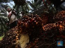Kantong Negara Kecipratan Sawit, Setoran Naik Hampir 3000%