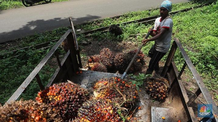Pekerja mengangkut kelapa sawit kedalam jip di Perkebunan sawit di kawasan Candali Bogor, Jawa Barat, Senin (13/9/2021). (CNBC Indonesia/Andrean Kristianto)