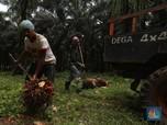 Jokowi Bakal Stop Ekspor CPO, Saham Produsennya Ambles