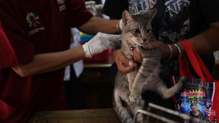 Vaksin Rabies umtuk Hewan Peliharaan (CNBC Indonesia/Tri Susilo)