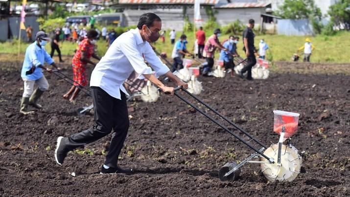 Presiden Jokowi berada di lokasi Tani Maju Makmur, Jln. Rajawali, Keluarahan Klamalu, Kecamatan Aimas, Kabupaten Sorong Papua Barat untuk melakukan penanaman benih jagung didampingi oleh Petani. Senin (4/10/2021). (Setpres-Agus Suparto)
