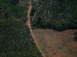 Keadaan Hutan Amazon Kritis, Kehidupan Manusia Diujung Tanduk