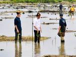 Jokowi Geber Rehabilitasi 600 Ribu Ha Mangrove RI Hingga 2024