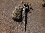 Pedang Perang Salib Ditemukan Israel, Ini Penampakannya